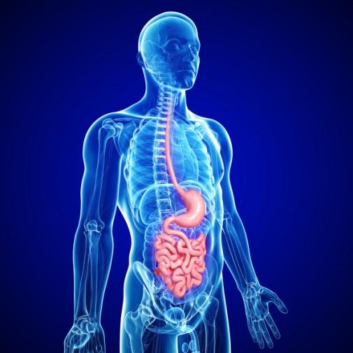 Barrett's esophagus: The hidden link to cancer