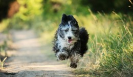 Is your dog bringing unwanted bacteria into the house?