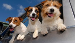 Your dog may be helping your heart