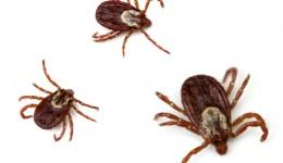 Tiny ticks pose big problems