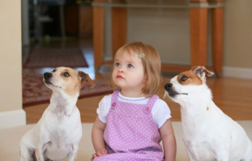 How dogs can decrease allergy risks