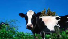 AAP warns of foodborne illness from raw milk