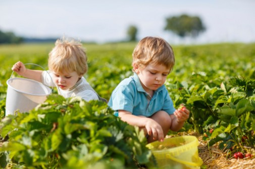 Healthy lifestyle begins during childhood