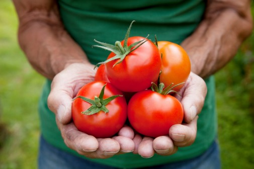 Can eating tomatoes lower risk of prostate cancer?