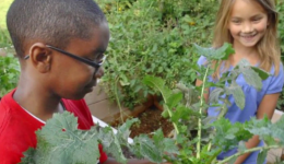 Teaching gardens promote healthy habits