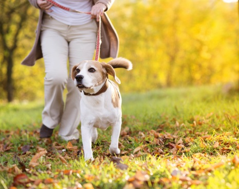 Overweight dogs motivate owners to get active