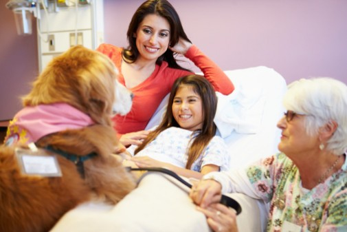 New pet therapy guidelines announced