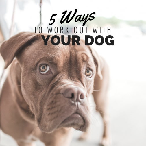 Infographic: 5 ways to workout with your dog