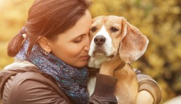 Are dogs able to read human emotions?