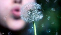 5 tips for managing spring allergies