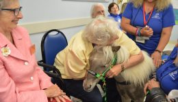 Mini horses just what doctor ordered
