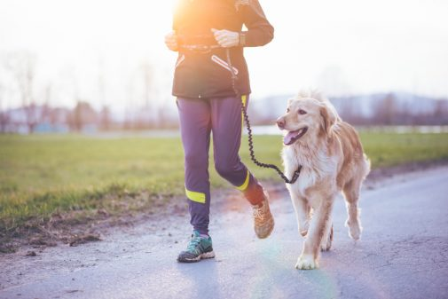 Could a pill help you and your dog live longer?