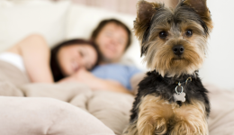 Should canines crash in your bed?