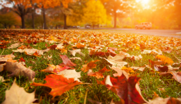 6 tips to turn your autumn chore into an exercise opportunity