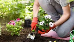 Plant your garden without feeling aches and pains