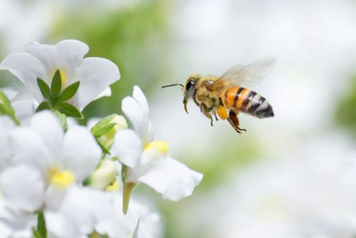 Bee prepared to deal with spring and summer stings