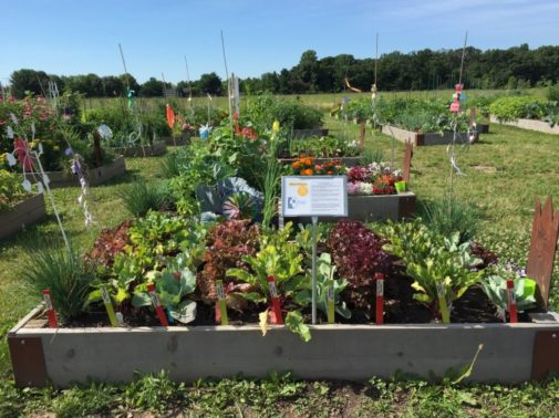 This is how your garden can be good for your health
